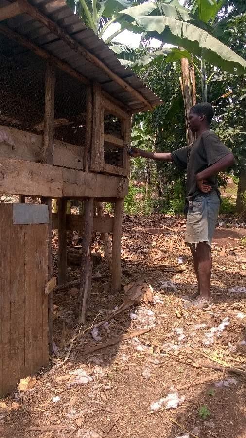 Der Koch steht vor dem Hühnerstall und überlegt, welches Huhn jetzt drankommt.