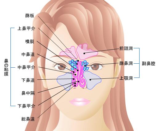 鼻・副鼻腔