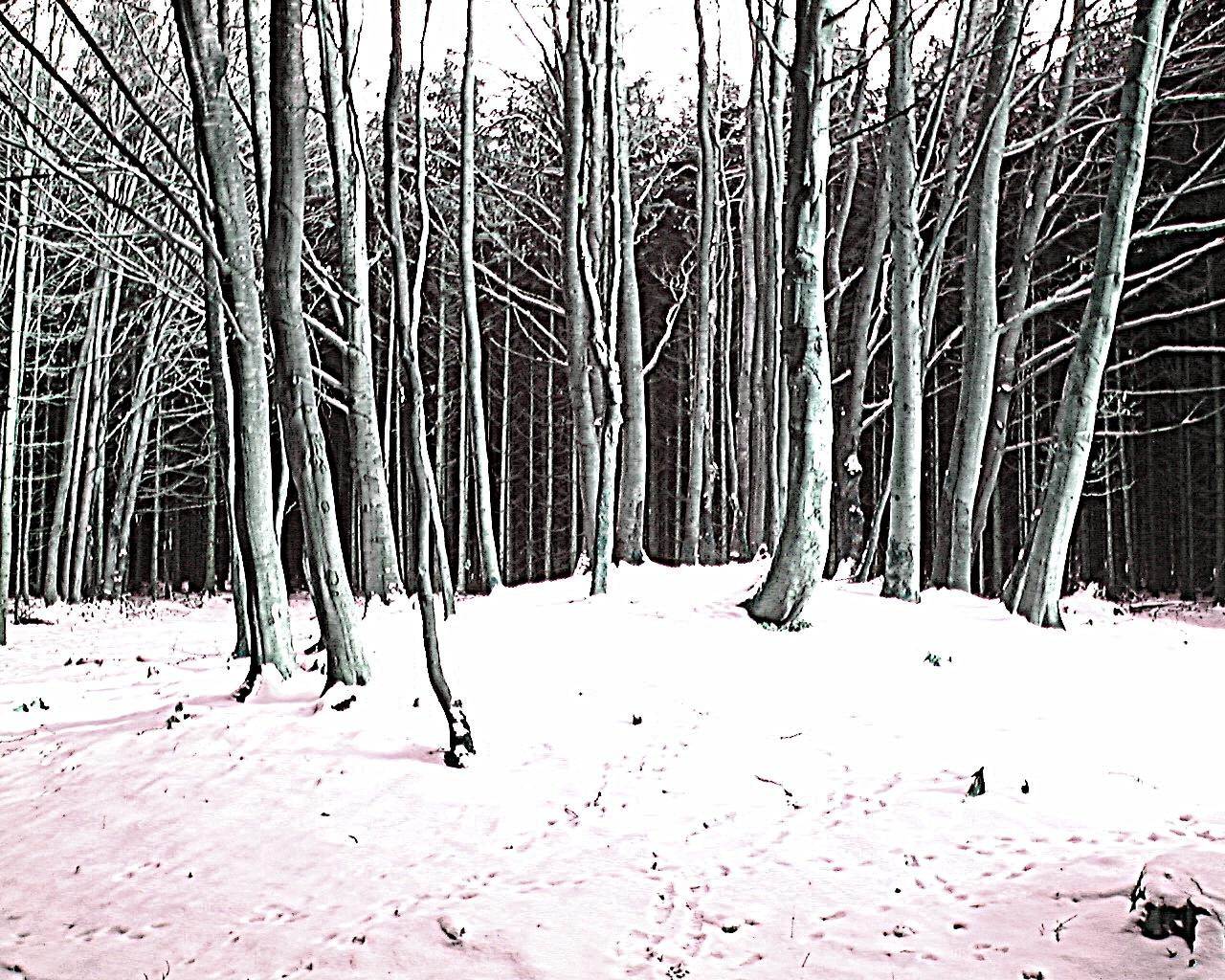 keltische Hügelgräber, Walderlebnispfad Denklingen