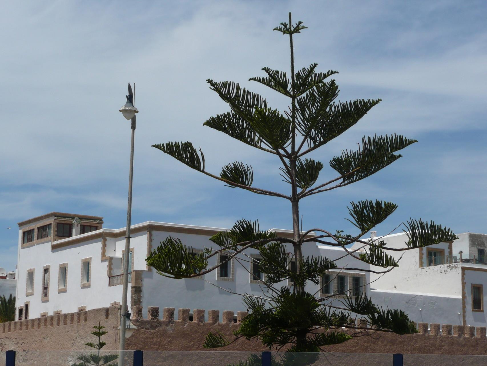 Essaouira, Alststadt