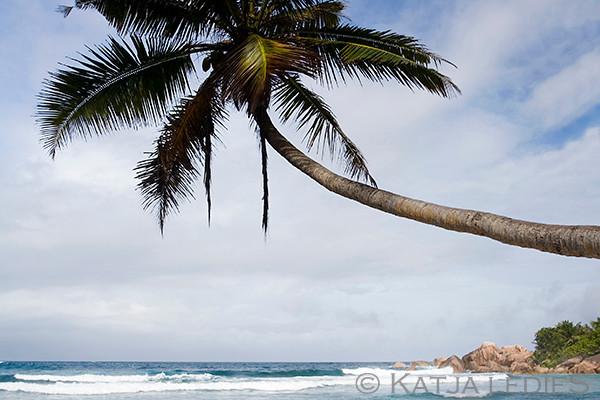 La Digue: Unter Palmen - Anse Cocos