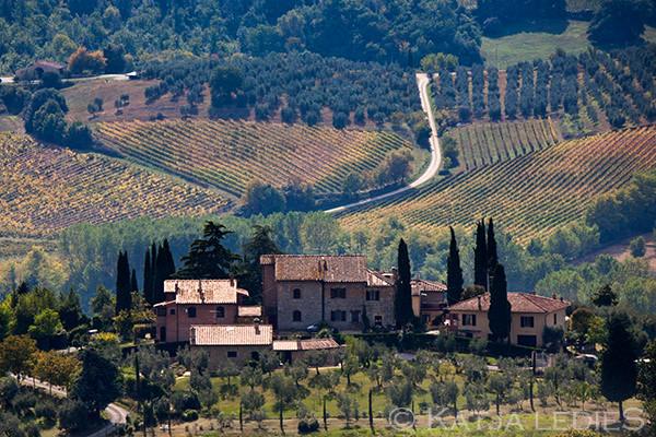San Gimigiano: Weinanbau