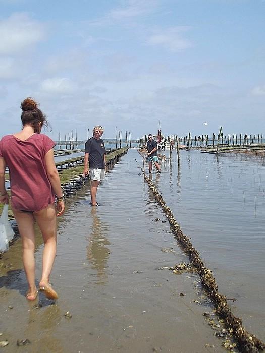 voir les huîtres cap ferret Pascaud