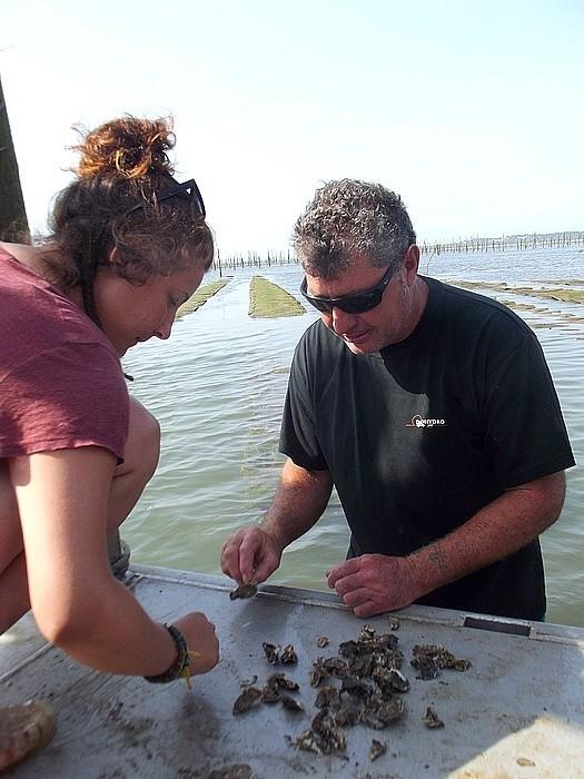voir les huîtres cap ferret Pascaud la découverte