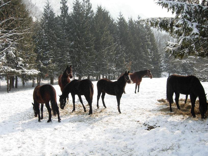 ...der erste Winter