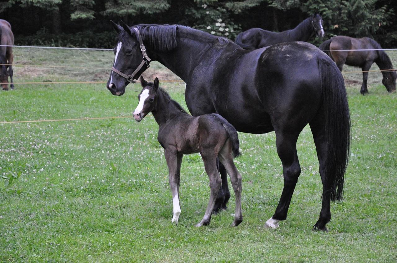 Napiri Gold mit ihrer hübschen Mutter