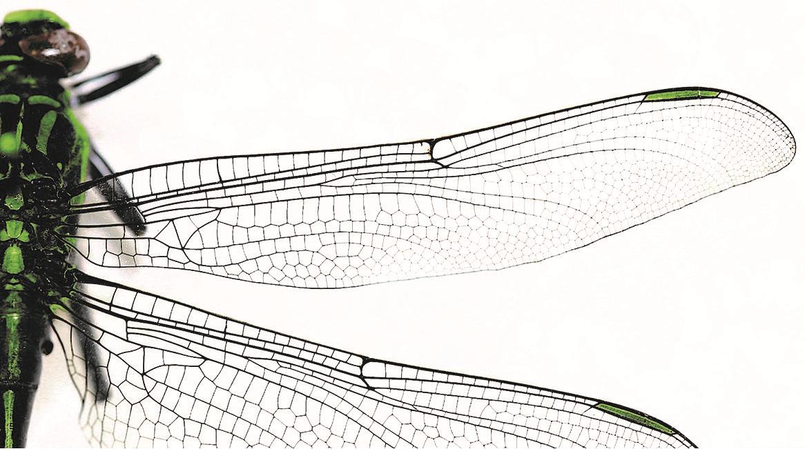 Line Drawing Net : Mechanical processes combinnotec