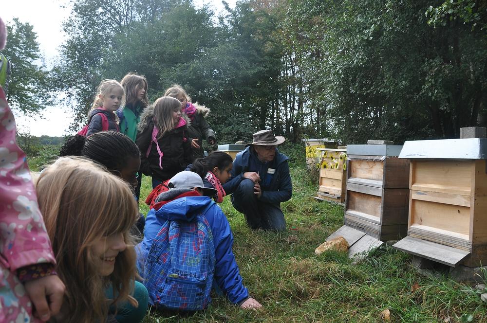 Beobachtung am Bienenstock