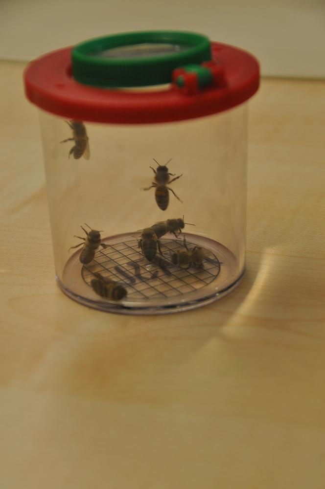Oh Wunder. Totgeglaubte Bienen leben