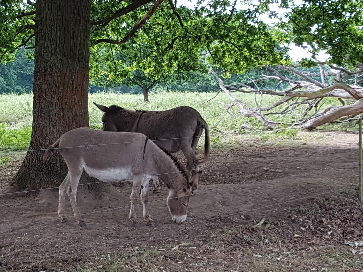 Die Esel waren gar nicht scheu