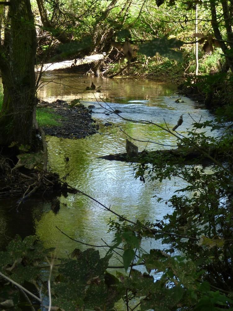 romantische Urft - Heimat der Wasseramsel