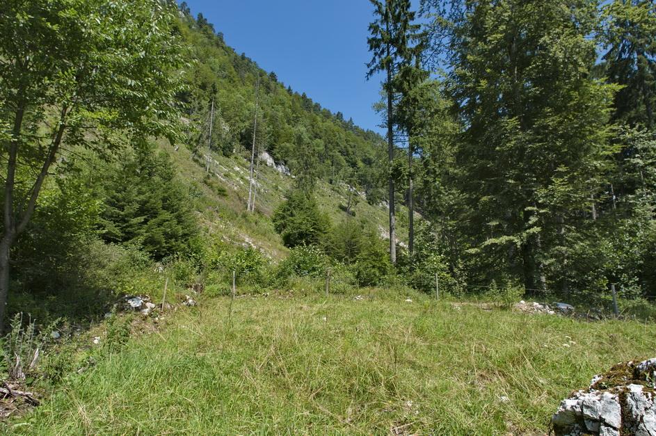 Lichtungsschlag zur Förderung von Schlingnatter und Aspisviper, Kanton Solothurn