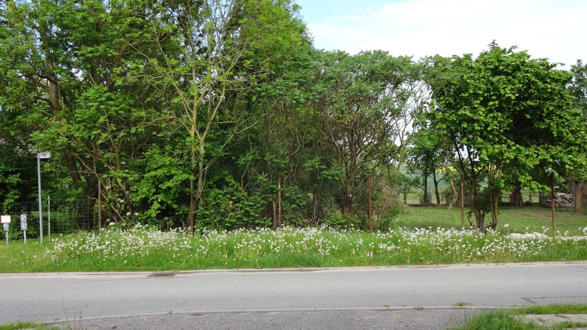Blick auf das Grundstück auf der anderen Seite der Strasse