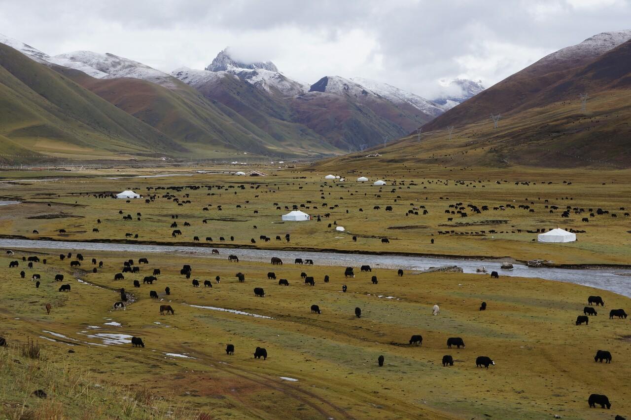 Plateau tibétain - Sichuan - Chine