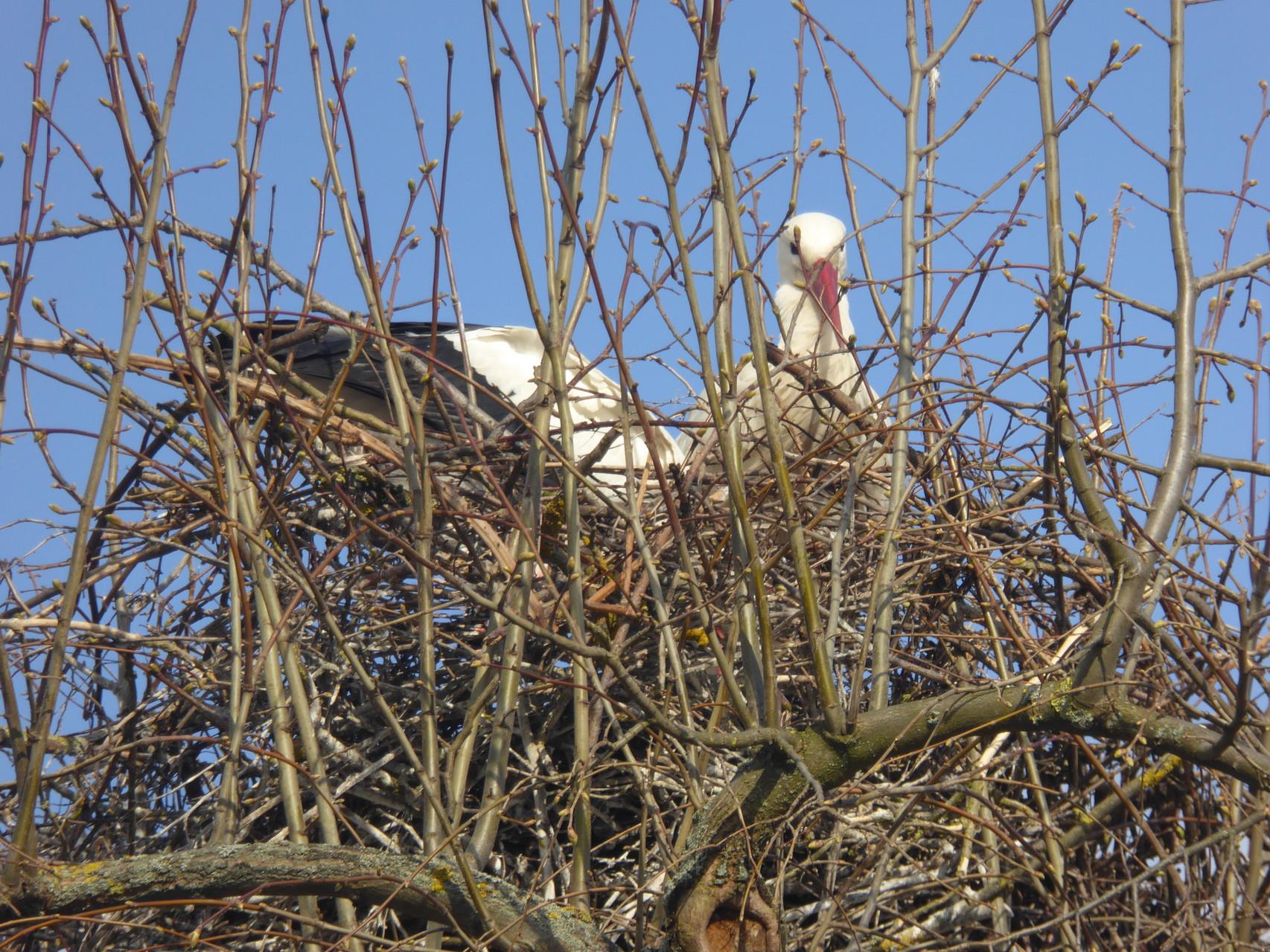 Storch im Nest Bahnhofstraße, Dornheim
