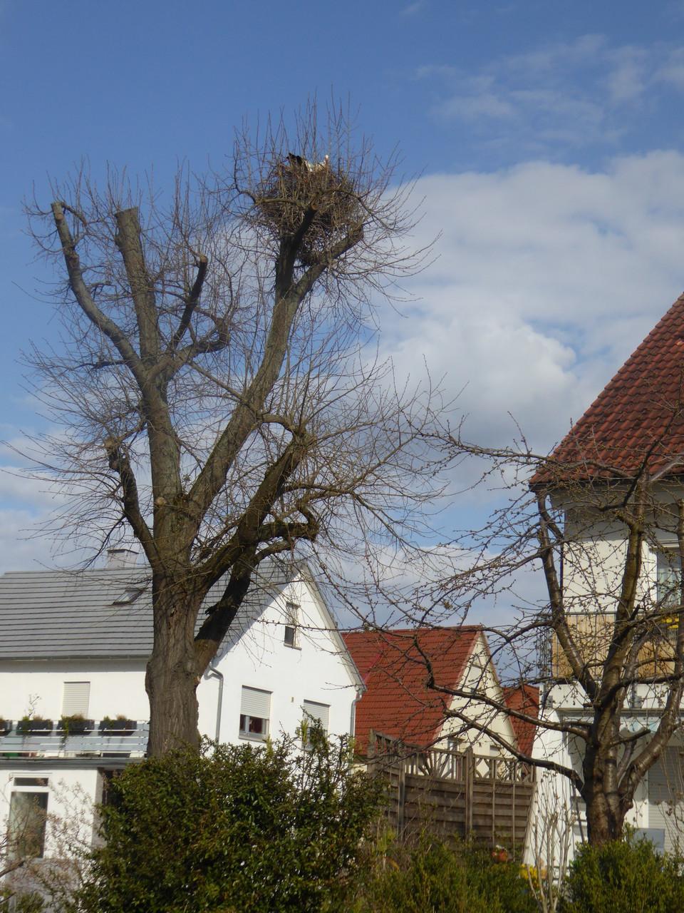 Storchennest mitten in Dornheim, Bahnhofstraße