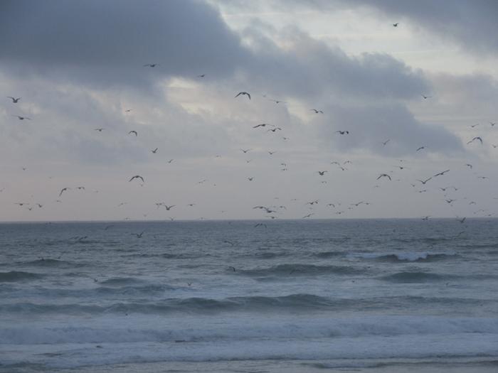 Meer Möven Atlantik