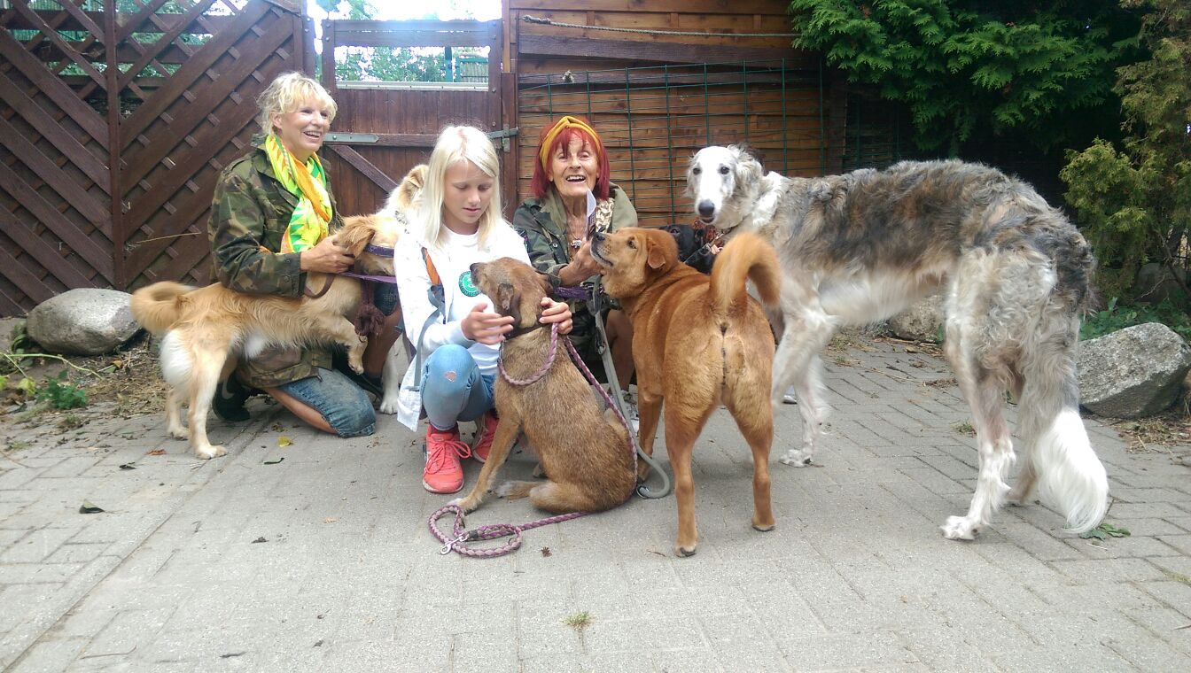 Tiere In Not Paderborn