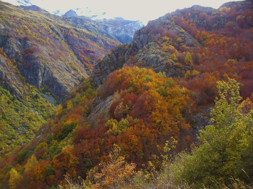 Forêt de hêtres en automne ( Gèdre Gavarnie )