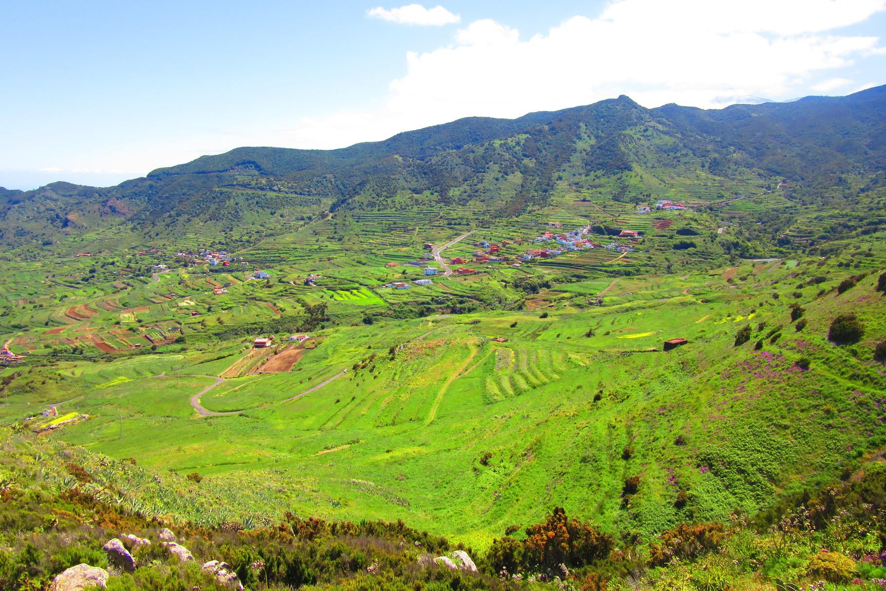 Tenerife , cultures en terrasse
