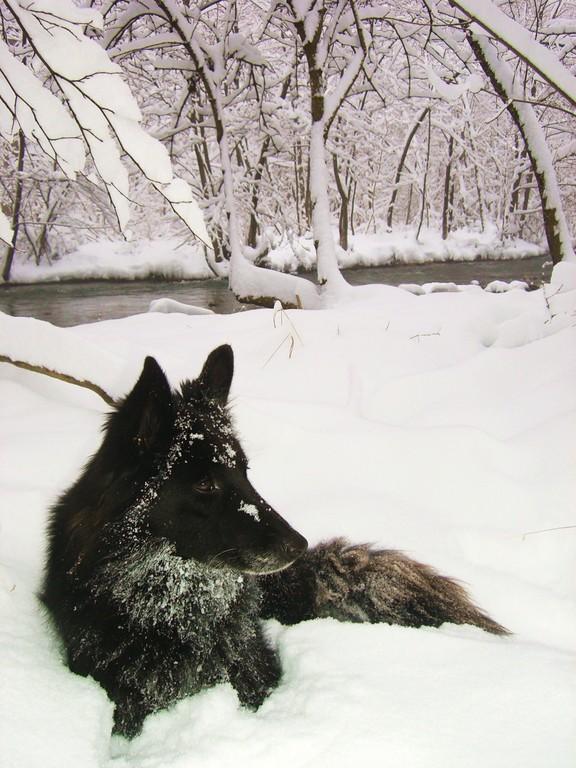 Loopi dans la neige