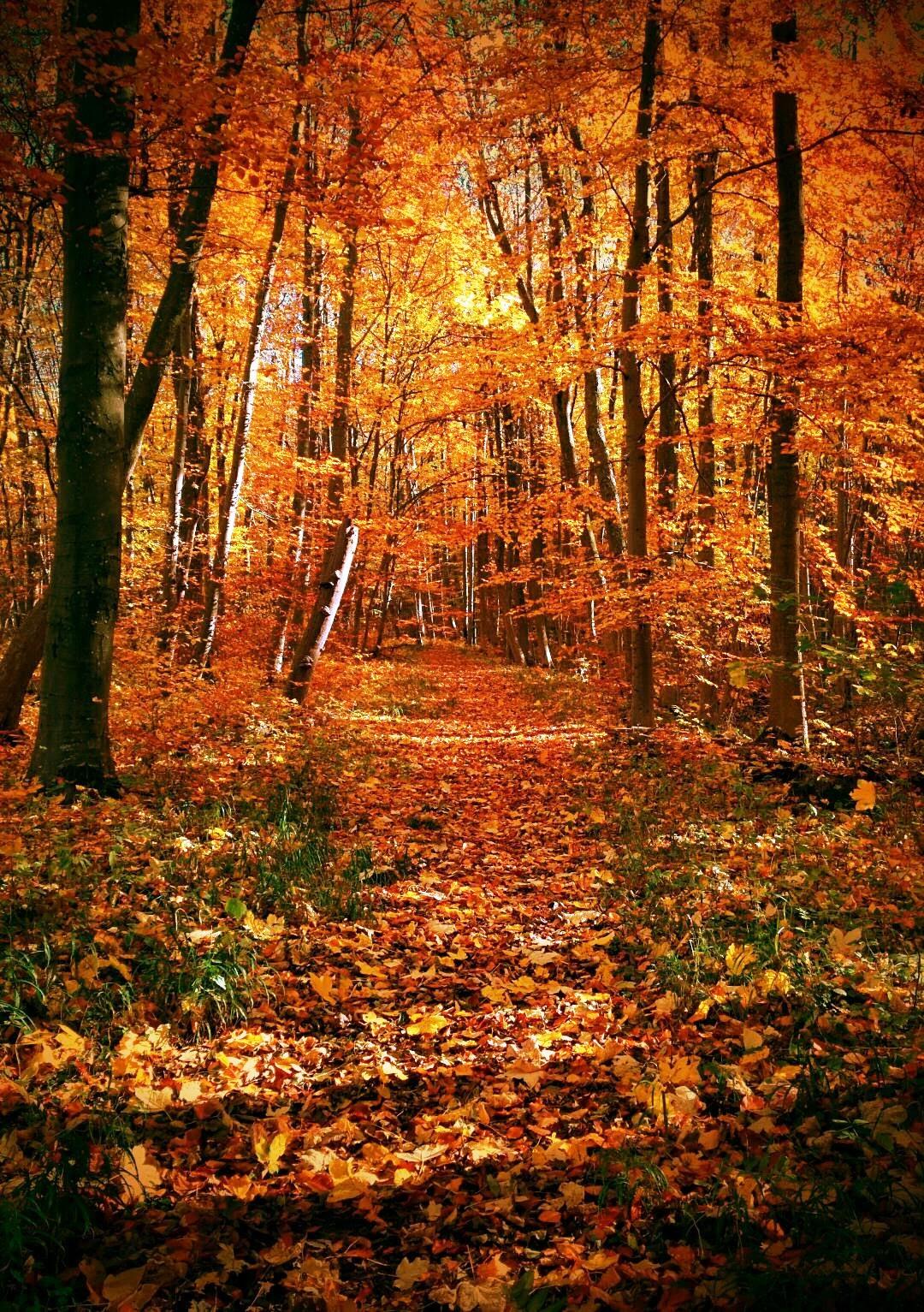 Herbst Ettenstatt-Märchenwald