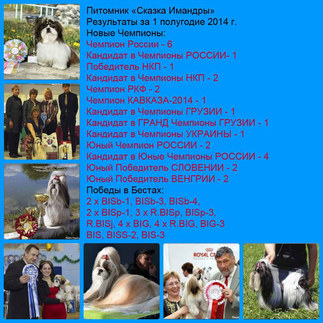 "The results of the kennel ""Skazka Imandri"" for the 1st half of 2014."