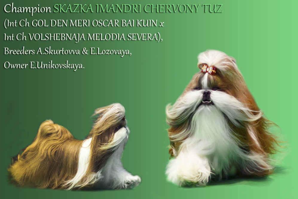 Cand. INTER CH,  GRAND CH Skazka Imandri CHERVONY TUZ