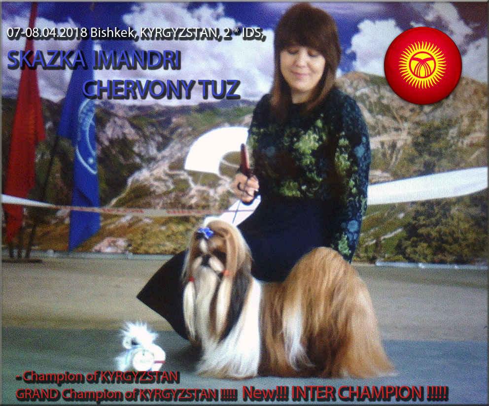 INTER CH, GRAND CHAMPION Skazka Imandri CHERVONY TUZ