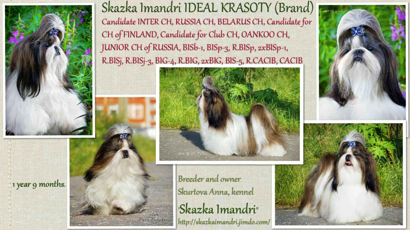 Cand. INTER CH,  CHAMPION Skazka Imandri IDEAL KRASOTY (Brand)