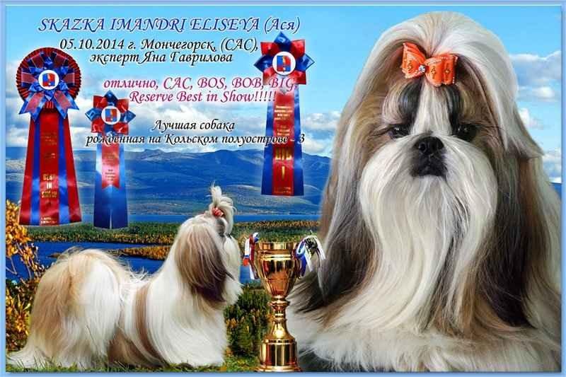 CHAMPION Skazka Imandri ELISEYA