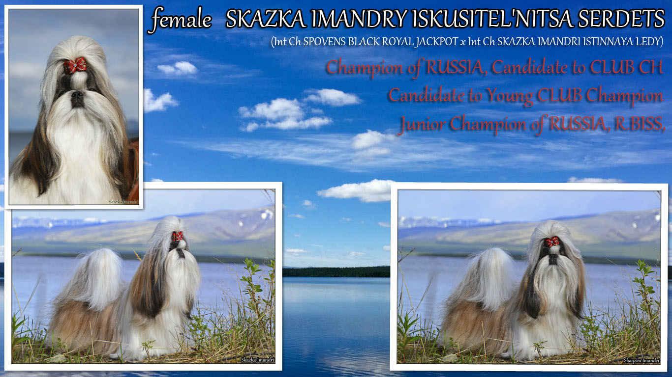 INTER CH,  GRAND CHAMPION Skazka Imandri ISKUSITEL'NITSA SERDETS