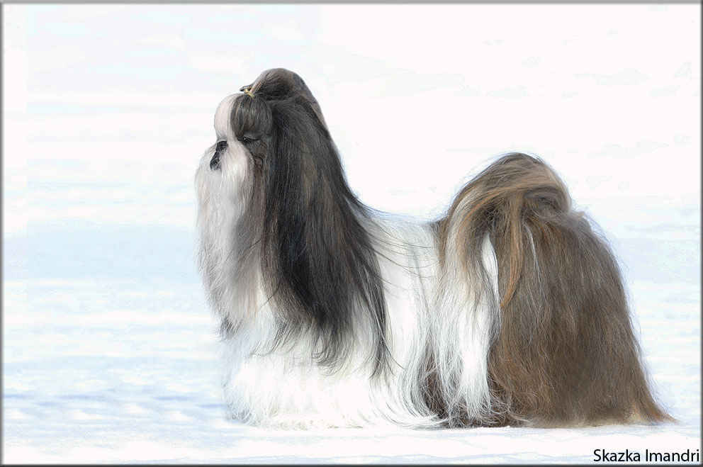 INTER Champion, MULTI Champion Skazka Imandri Ideal Krasoty - Brand).