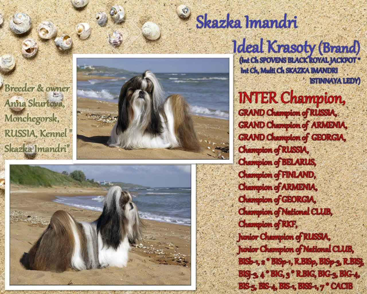INTER CH, MULTI CH, GRAND CH Skazka Imandri IDEAL KRASOTY (Brand)
