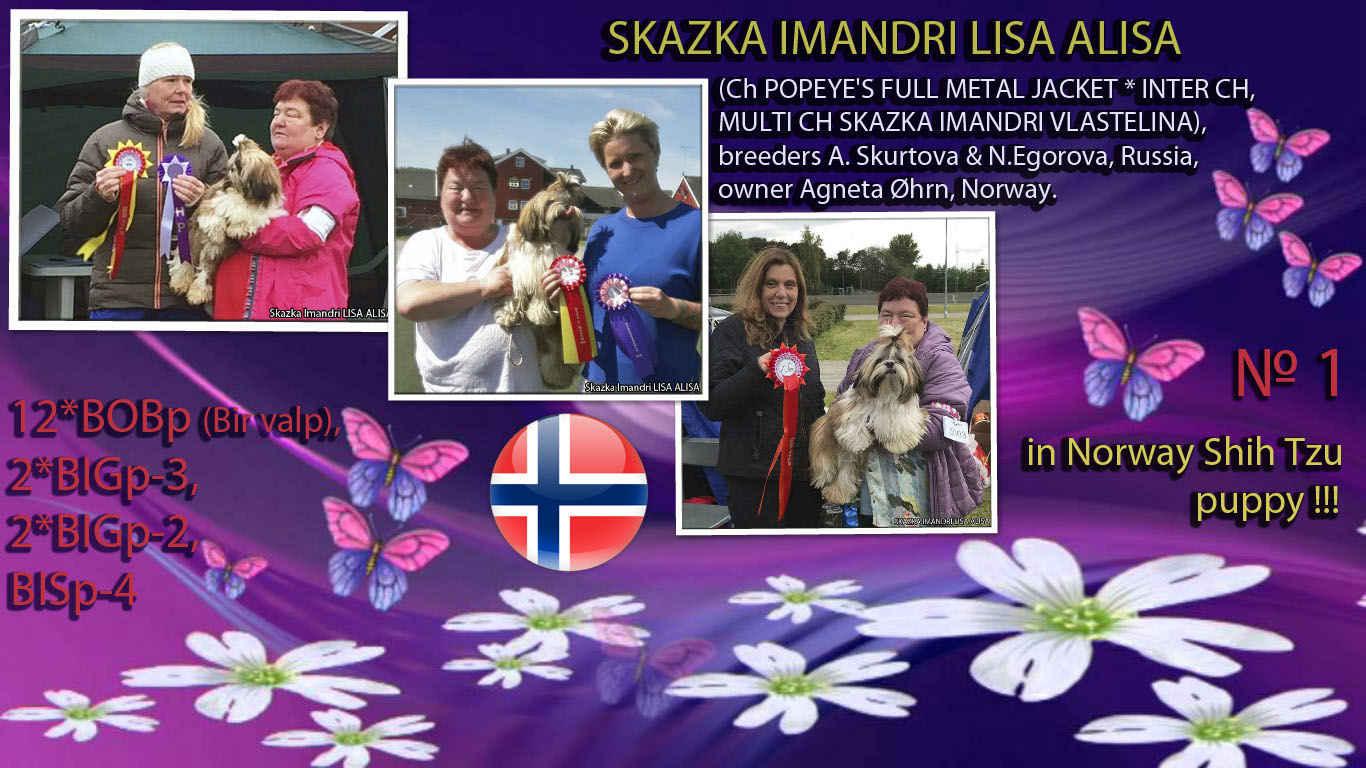 Skazka Imandri LISA ALISA - 1 shih tzu in the rating of puppies NORWAY