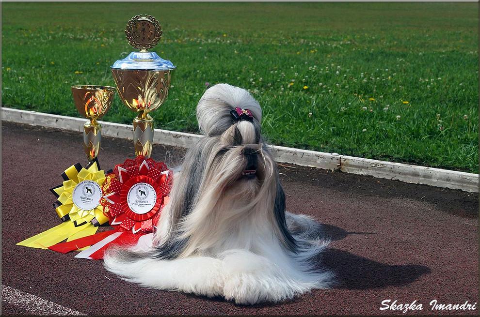 Grand CH, CHAMPION Skazka Imandri VASILINA