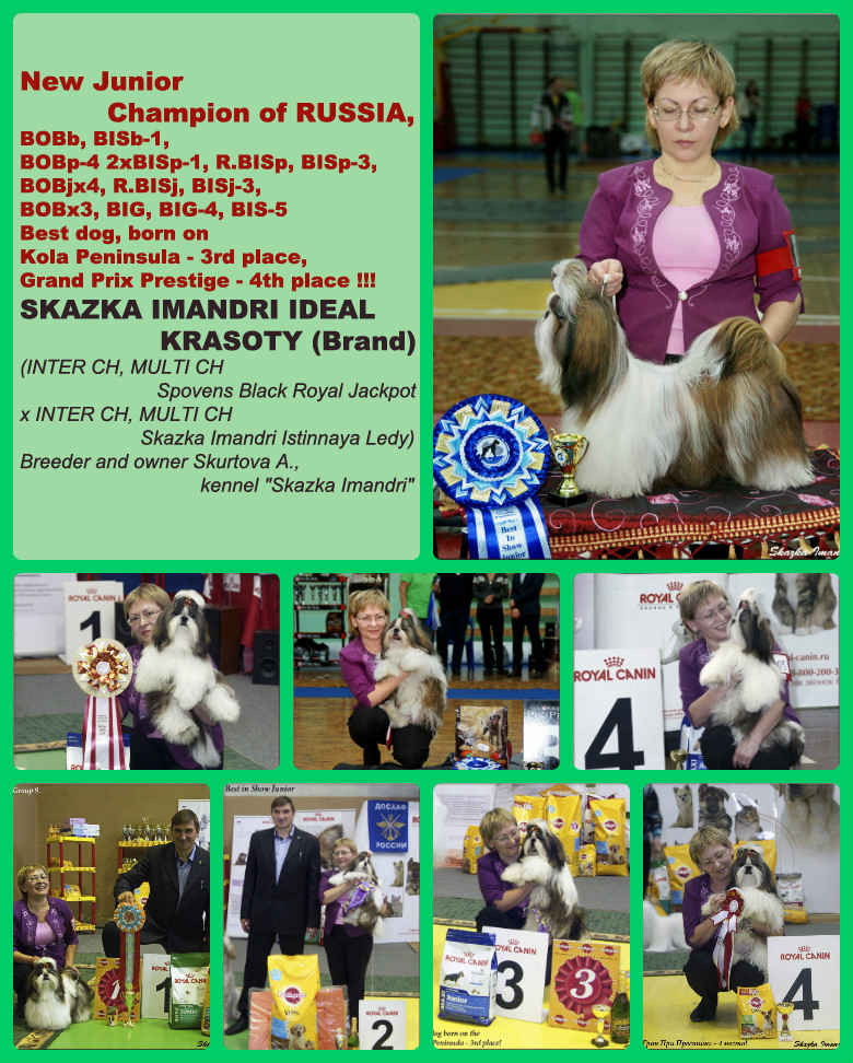 Junior Champion RUSSIAN S.I.IDEAL KRASOTY (Brand)
