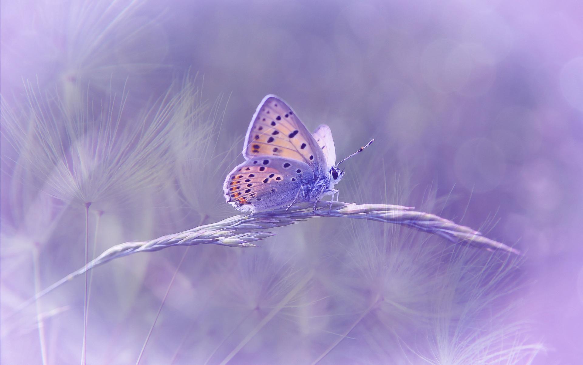 Die Geburt eines Schmetterlings - Podcast mit Spirit Online