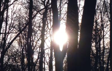 Behandlungsablauf - Wald
