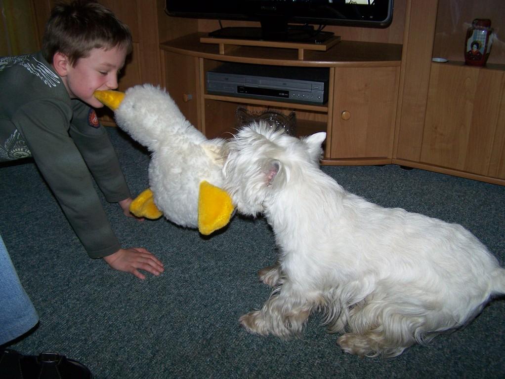 unser Enkel Lucas im Kampf um die Ente mit Manni