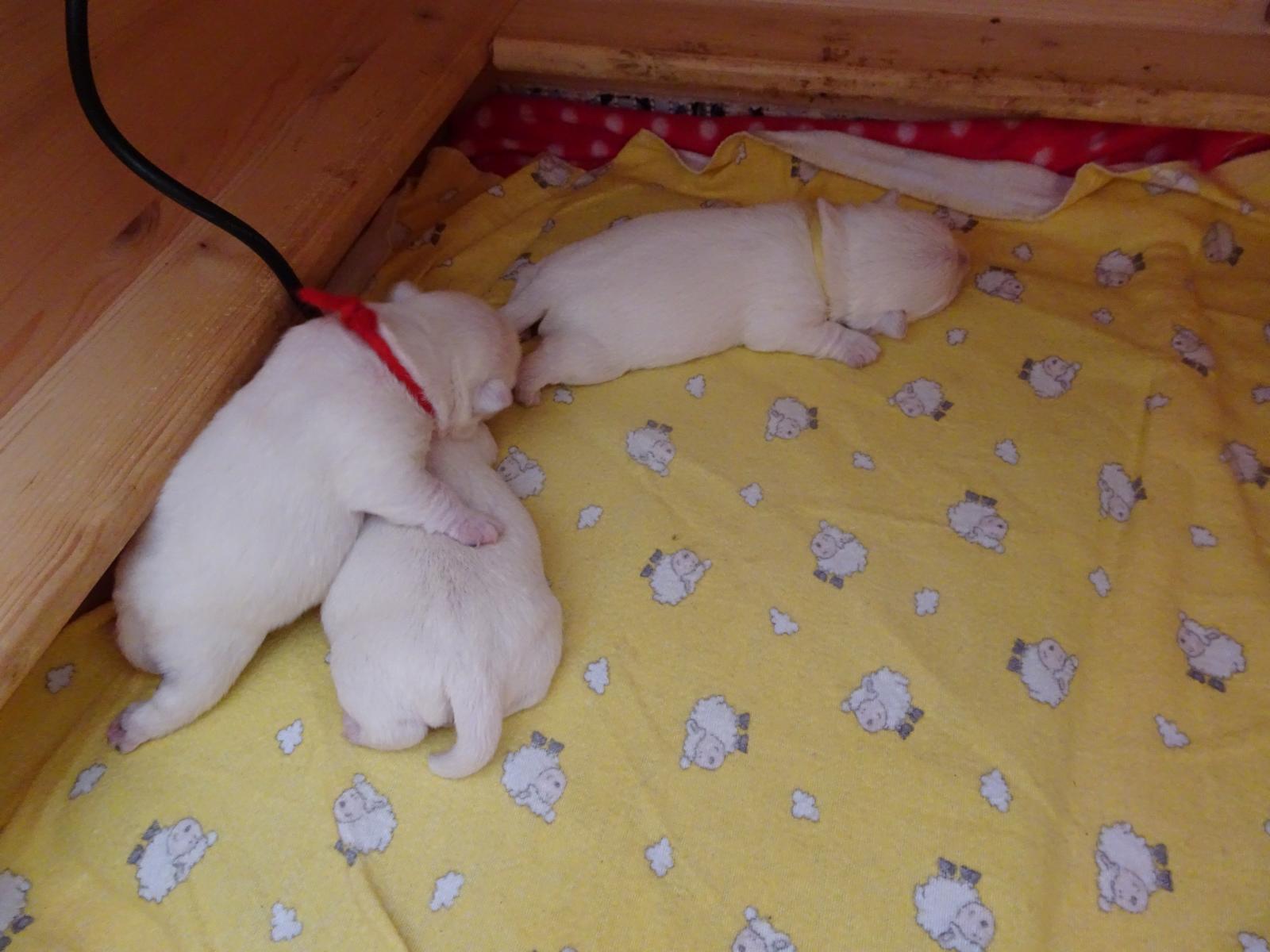 wir schlafen ganz viel