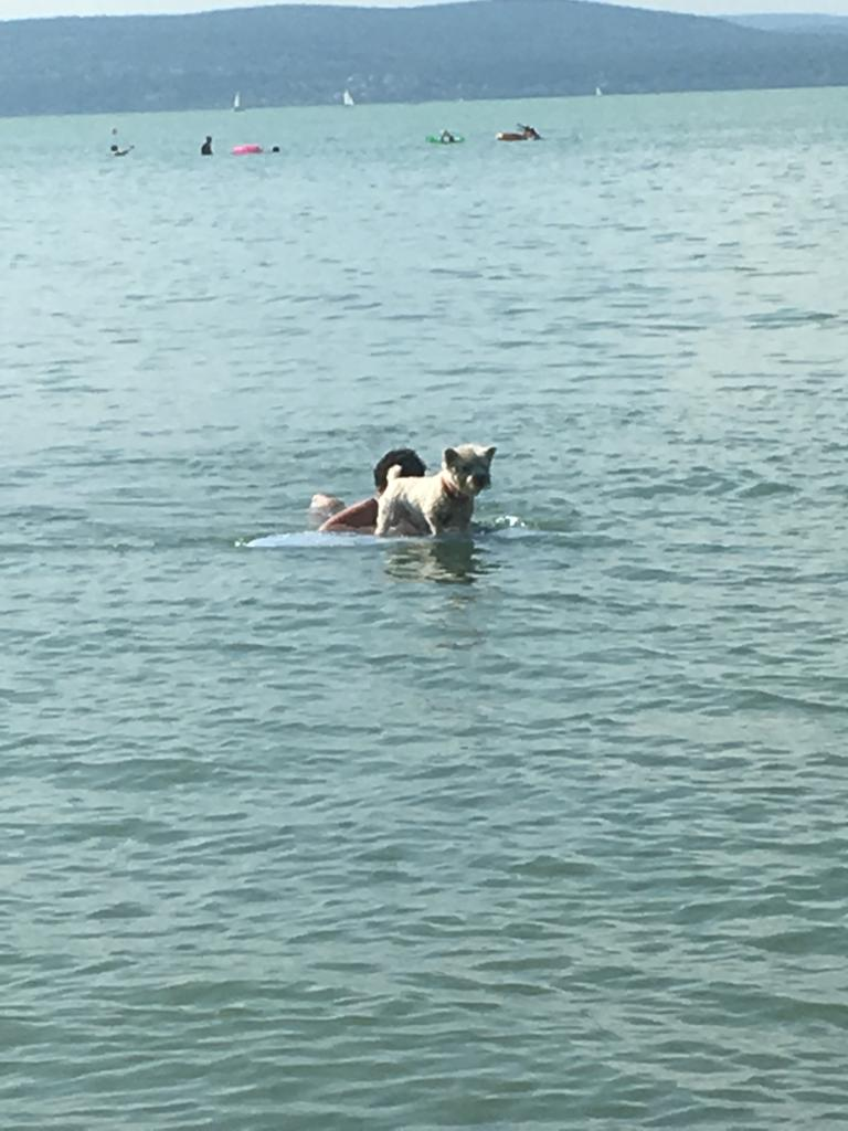 Auf dem Surfbrett im Balaton