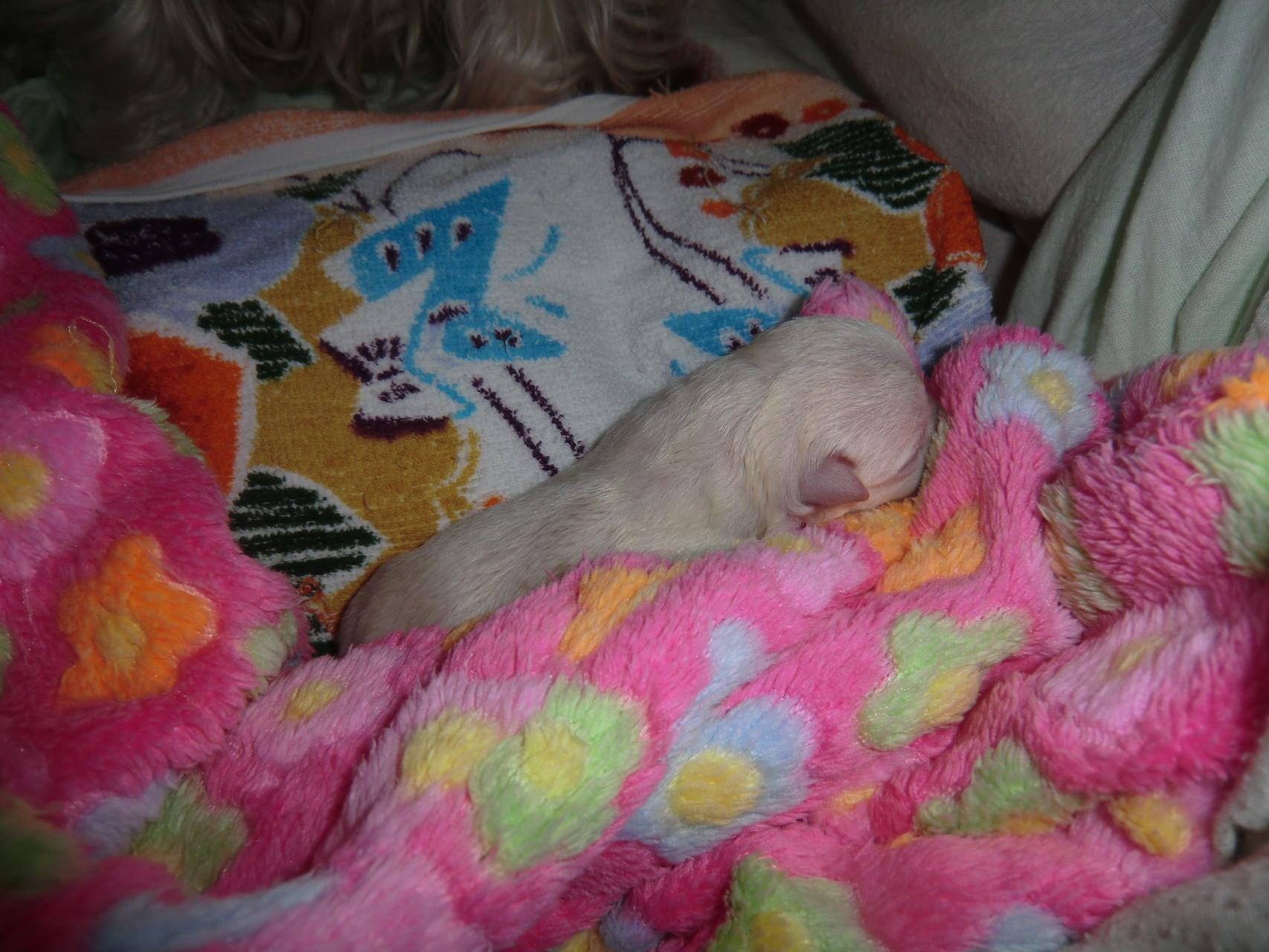 Unser erstes Baby - ein Mädchen - ist geboren