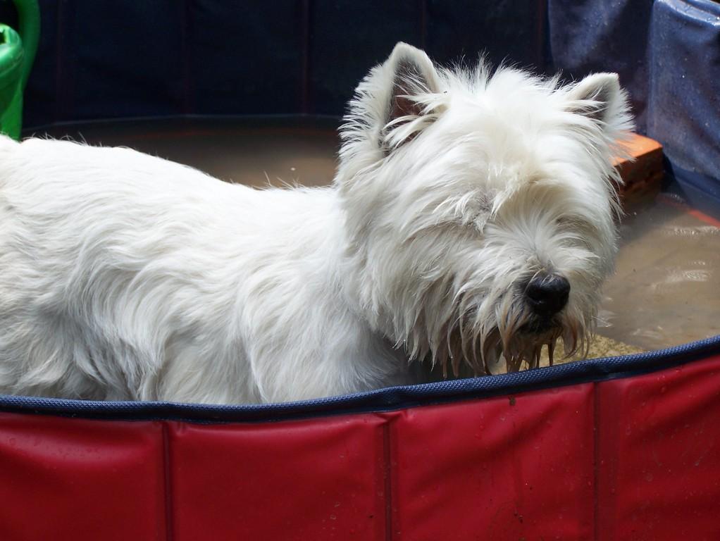 Carlchen im neuen Doggy-Pool