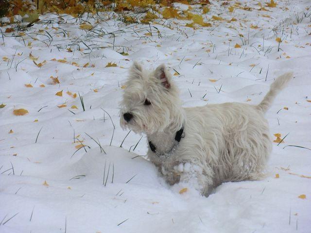 Lizzy findet den Schnee toll