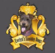 Snobby Dogs Hundesalon & Scherschule - Charlottenburg