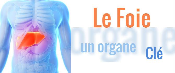 Gut gemocht Le Foie un organe clé - Minéraux et Corps Humain : votre santé au  YR52
