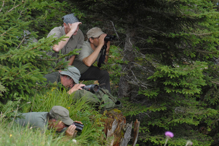 Wildbeobachtungen in der Bergnatur