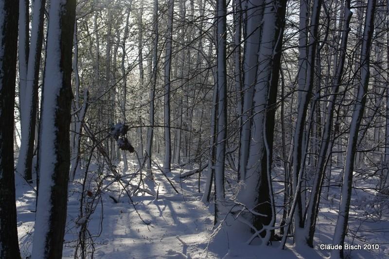 Ecorces et neige mêlés