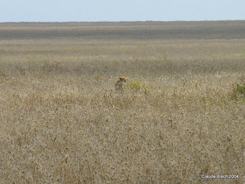 Un coup d'oeil dans la plaine